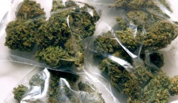 Will NY Legalize Recreational Pot in 2017?