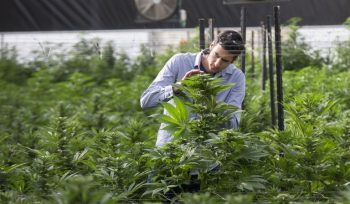In Pioneering Research, Israeli Researchers Focus on Autism With Cannabis