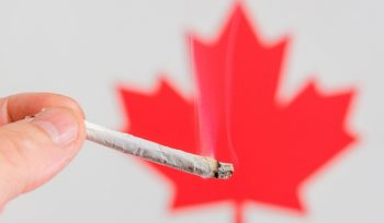 Create Medication Dull: Legalising Weed the Canada Way