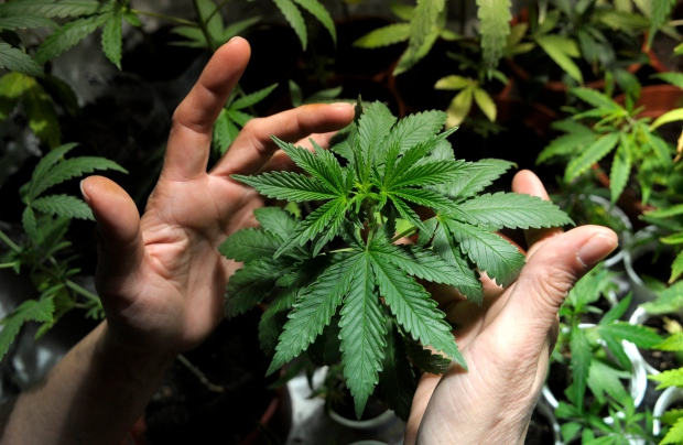 Will Cannabis be Federally Legal 5 years?