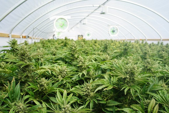 Will the pot industry really be bigger than the NFL by 2020?