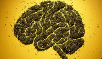 New Research Will Evaluate Marijuana's Impact on Young Brains