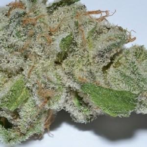 Kush Cookies (Hybrid) Weed