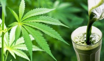 5 Advantages of Juicing Weed You Probably Don't Know About