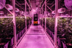 What to Find out About Employed in Marijuana