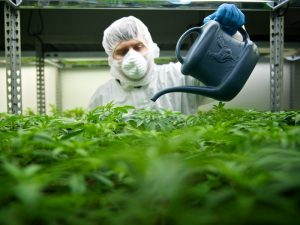 To remove illicit cannabis marketplaces, we are in need of e-commerce container delivery
