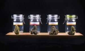 More medical pot dispensaries start in Maryland