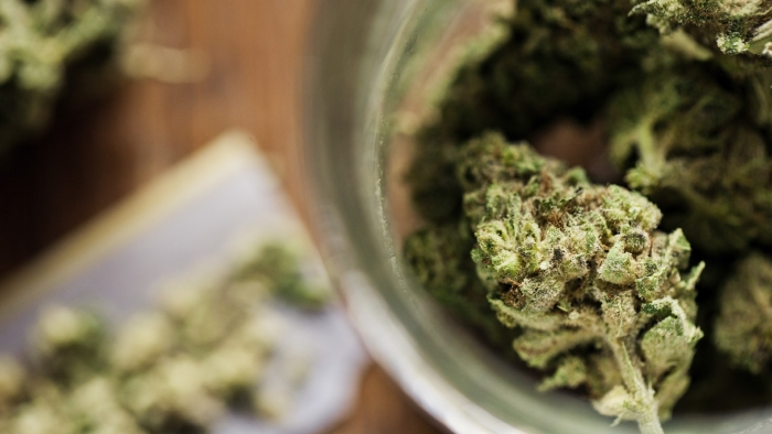 Florida Congress Seek to Guard Medical Mmarijuana Customers in the Workplace
