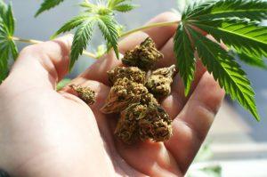 NY's top health formal needs to legalize marijuana