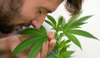 5 Things you can study from just smelling your cannabis