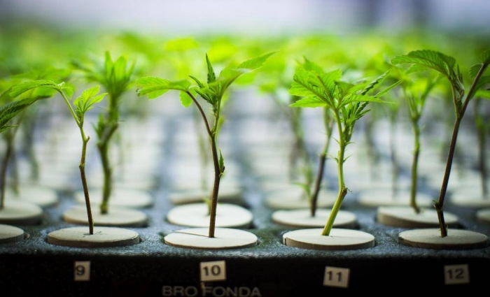 What's modifying in the weed industry during the end of the summer