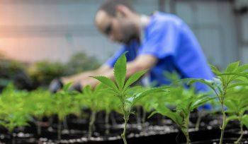 Florida: Lawsuits install over marijuana licenses